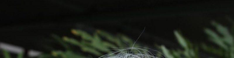 Серые волосы для стрижки каре (25 фото)